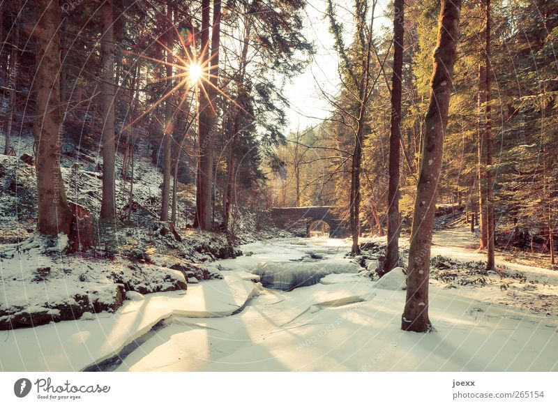 Sky Nature White Beautiful Tree Sun Winter Black Calm Forest Yellow Cold Snow Lanes & trails Ice Brown