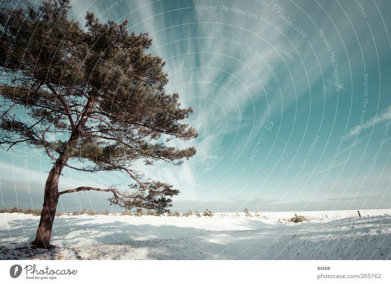 Sky Nature Blue White Tree Beach Clouds Winter Landscape Environment Cold Snow Coast Bright Air Horizon
