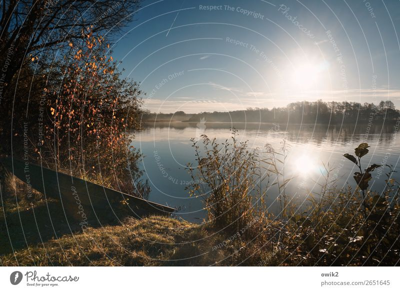sunk Environment Nature Landscape Plant Water Cloudless sky Horizon Sun Autumn Beautiful weather Tree Bushes Leaf Wild plant Twig Blade of grass Lakeside