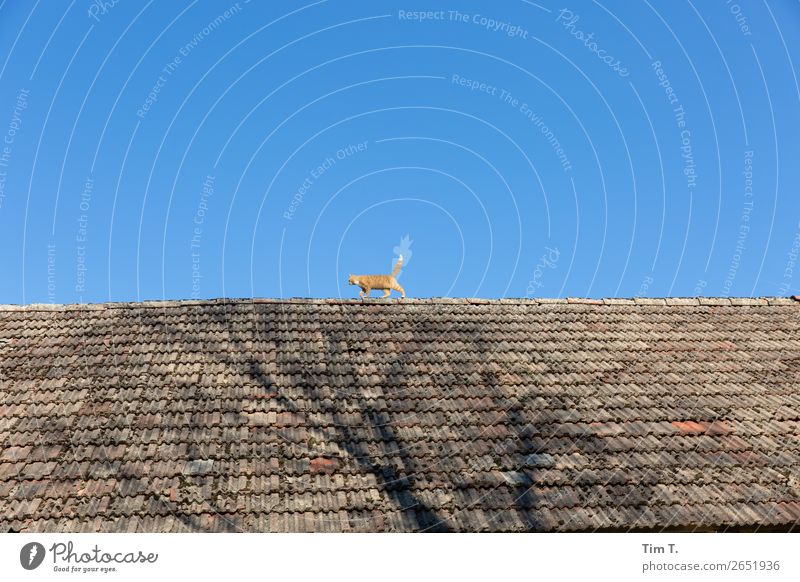 Cat on the roof Village Deserted House (Residential Structure) Manmade structures Building Roof Animal Wild animal 1 Baby animal Adventure Idyll Trust