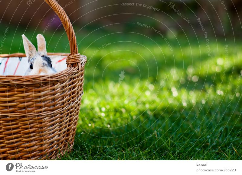 Easter shopping basket Environment Nature Plant Sun Sunlight Spring Beautiful weather Grass Foliage plant Garden Animal Pet Animal face Hare & Rabbit & Bunny