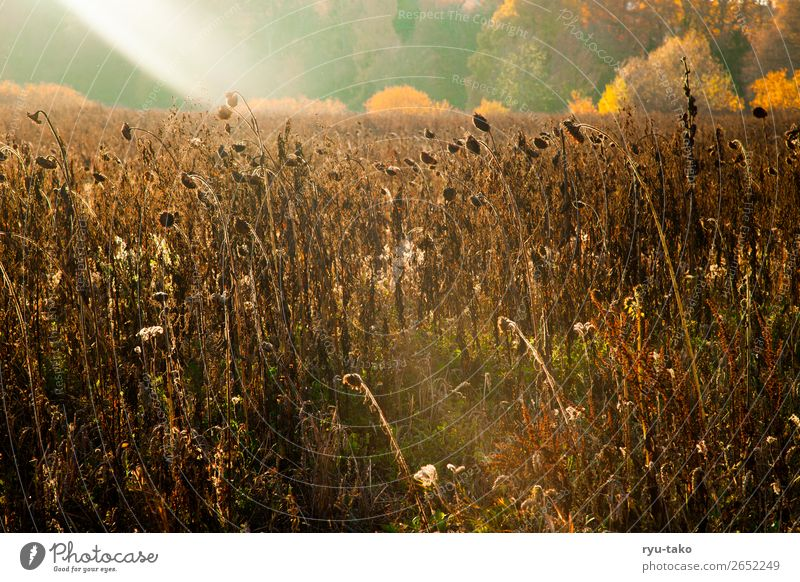 Nature Summer Plant Landscape Calm Autumn Warmth Contentment Wild Field Beautiful weather Transience Warm-heartedness Seasons Dry Serene