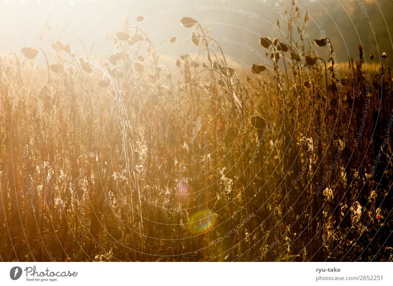 Nature Summer Plant Beautiful Calm Autumn Warmth Contentment Wild Illuminate Field Authentic Beautiful weather Transience Dry Serene