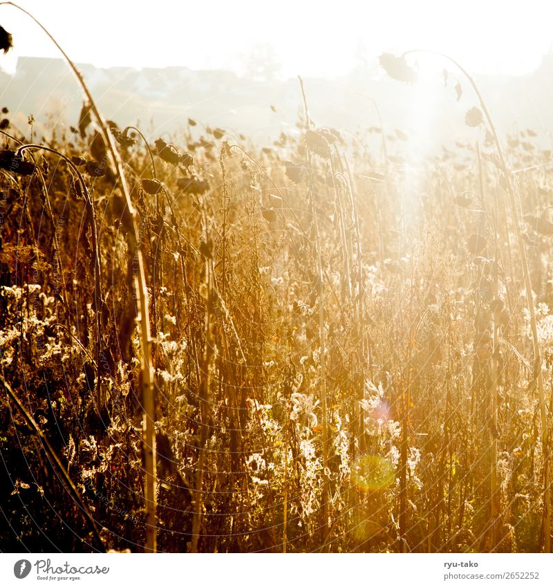 Nature Summer Plant Calm Autumn Warmth Contentment Field Esthetic Transience Hope Dry Serene Harvest Decline Dreamily