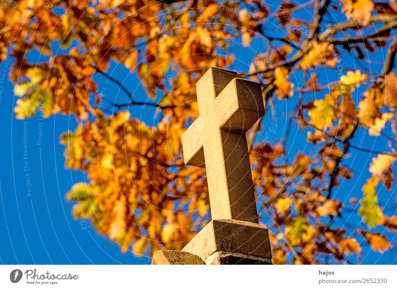 Cross with autumnal leaves in the background Sign Crucifix Yellow Religion and faith christian Catholic symbol pilgrim path pilgrim road Way of the Cross Autumn