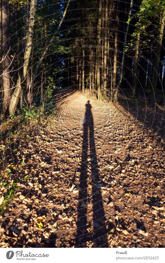 Illusion| Man with very long legs on a forest path Forest off Autumn trees Light Evening evening sunlight Human being taking a photograph Shadow