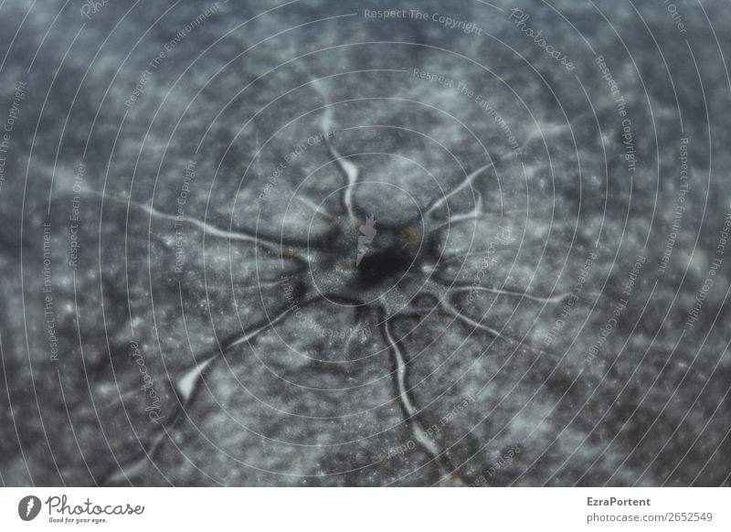 cell Environment Nature Water Winter Ice Frost Lake Cold Body cell Frozen Natural phenomenon Black & white photo Exterior shot Close-up Detail Abstract Pattern
