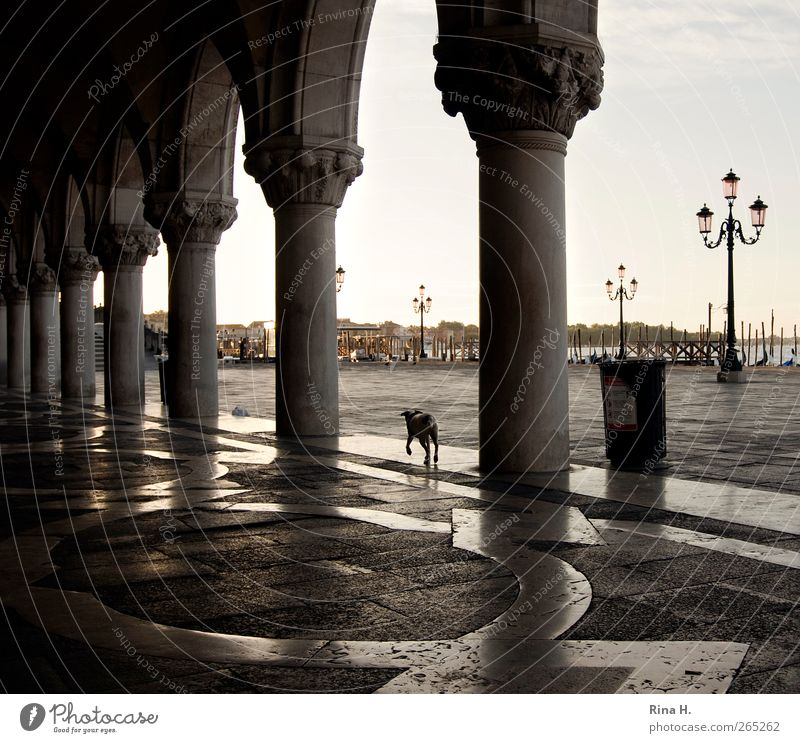 Dog seeks master Sunrise Sunset Summer Beautiful weather Venice Italy Building Tourist Attraction Animal Pet 1 Going Famousness Vacation & Travel early