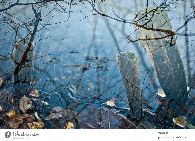 The lake rests still Nature Water Leaf Pond Lake Calm Wooden stake Limp Blue Twigs and branches Double exposure Colour photo Exterior shot Experimental Deserted