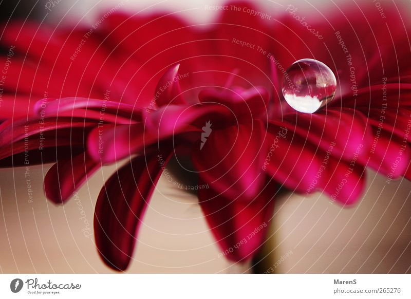 A drop of love. Nature Spring Flower Blossom Drop Fragrance Pink Emotions Colour photo Exterior shot Day Sunlight