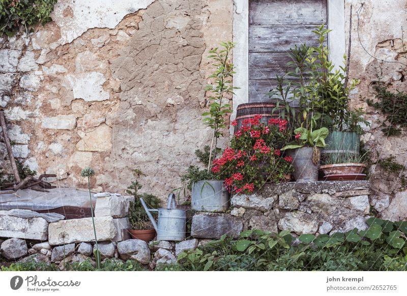 Istrian idyll Wall (building) flowers Old town Derelict Retro Idyll watering cans Garden Stone wall Facade Deserted Wooden door Exterior shot Historic