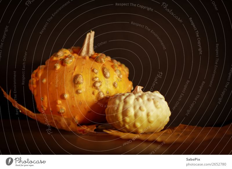 autumn pumpkin Autumn To dry up Esthetic Dark Natural Warmth Brown Multicoloured Yellow Orange Black Pumpkin Pumpkin time Decoration Nostalgia Mystic Wrinkles
