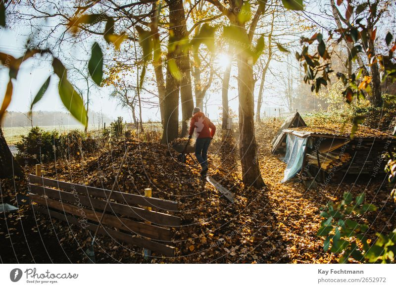 Man drives a wheelbarrow full of leaves on the compost in autumn Lifestyle Gardening Autumn Autumn leaves Autumnal Autumnal landscape Living or residing