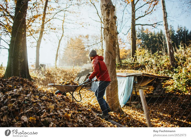 man wearing a red jacket is pushing a wheelbarrow full of leaves up a pile of foliage Wheelbarrow activity autumn backyard beanie botany cleaning cleanup fall