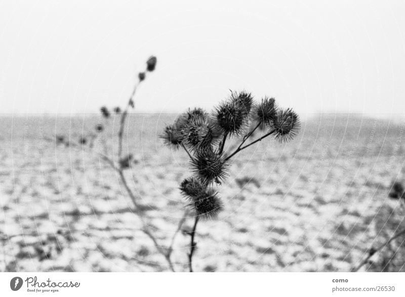 Nature Plant Winter Calm Loneliness Far-off places Cold Think Landscape Field Empty Seasons Thistle