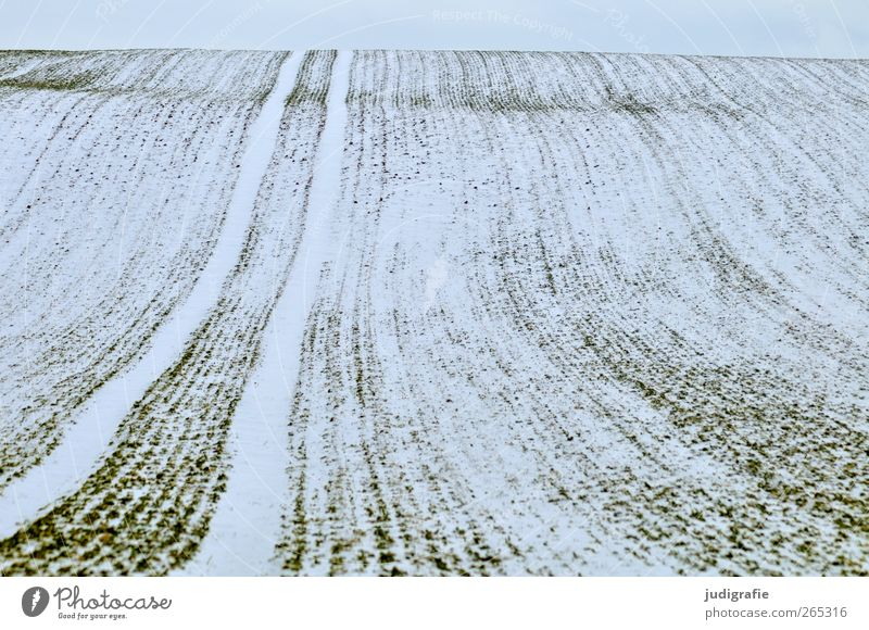 Uckermark Agriculture Forestry Environment Nature Landscape Winter Snow Field Cold Loneliness Calm Infinity Far-off places Undulation Line Tracks Colour photo