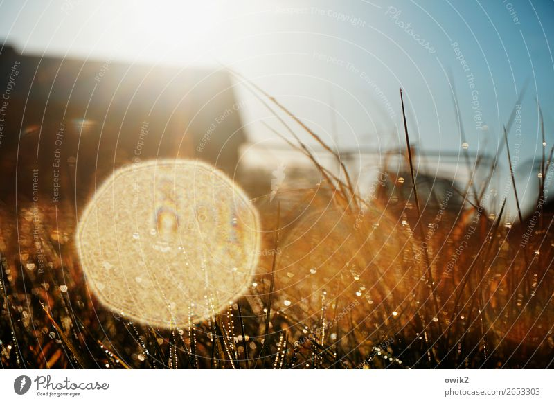 glossy print Environment Nature Plant Drops of water Cloudless sky Horizon Autumn Beautiful weather Grass Blade of grass Meadow Glittering Illuminate Fantastic