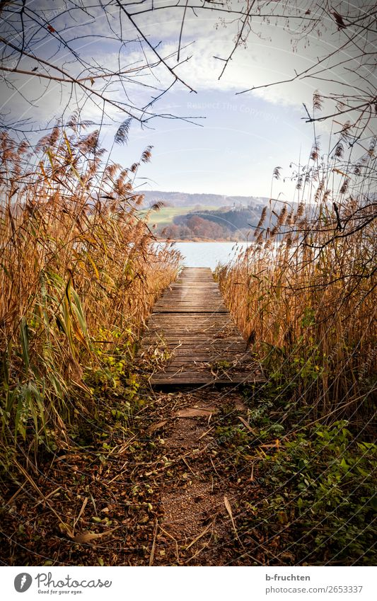 jetty, lake, reed, autumn atmosphere Nature Landscape Water Autumn Plant Lakeside Deserted Relaxation To enjoy Expectation Decline Transience Change Footbridge