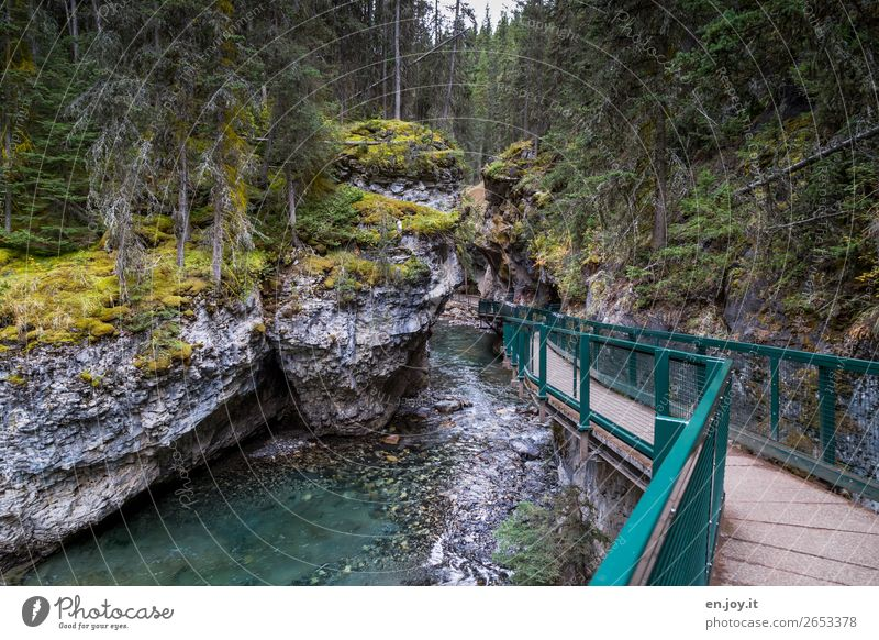 waterways Vacation & Travel Trip Adventure Expedition Nature Landscape Elements Moss Forest Rock Canyon Johnston canyon River Lanes & trails Tourism Canada