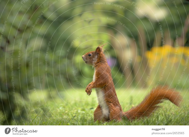 squirrels Environment Nature Plant Animal Spring Summer Autumn Beautiful weather Grass Bushes Garden Park Meadow Forest Wild animal Zoo Squirrel 1 Esthetic