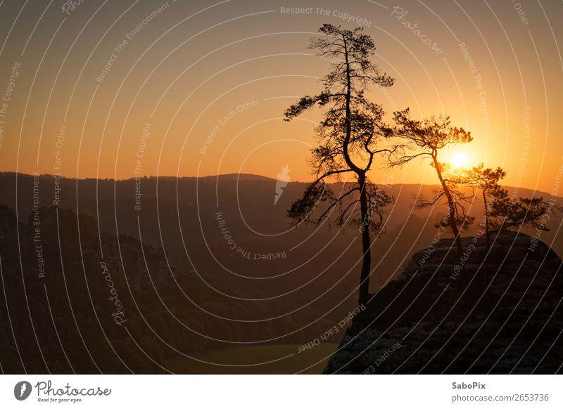 morning mood Environment Nature Landscape Sky Cloudless sky Horizon Sunrise Sunset Autumn Beautiful weather Tree Pine Hill Rock Illuminate Yellow Orange Moody