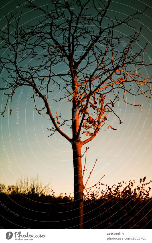 Sky Heaven Town Tree Calm Winter Autumn Sadness Berlin City life Branch Tree trunk Twig Dusk Play of colours Closing time