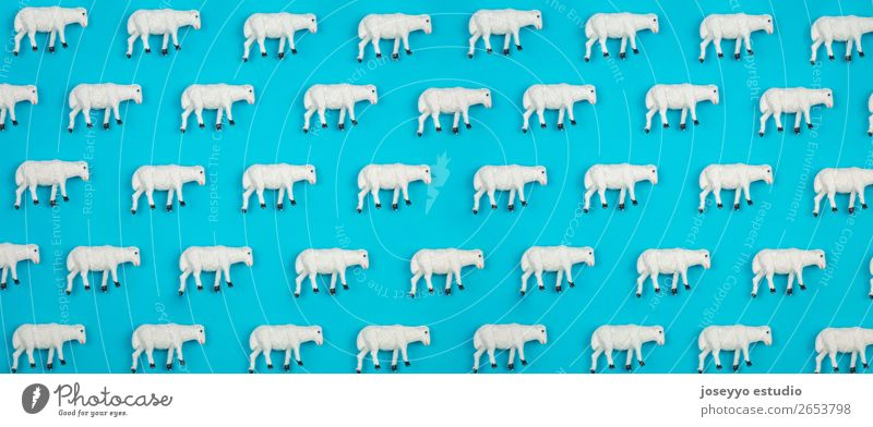 Pattern made of sheep. Animal Sheep Paper Toys Design above background pattern card banner Blue border arragement Celebration of success Cheerful belem flat lay