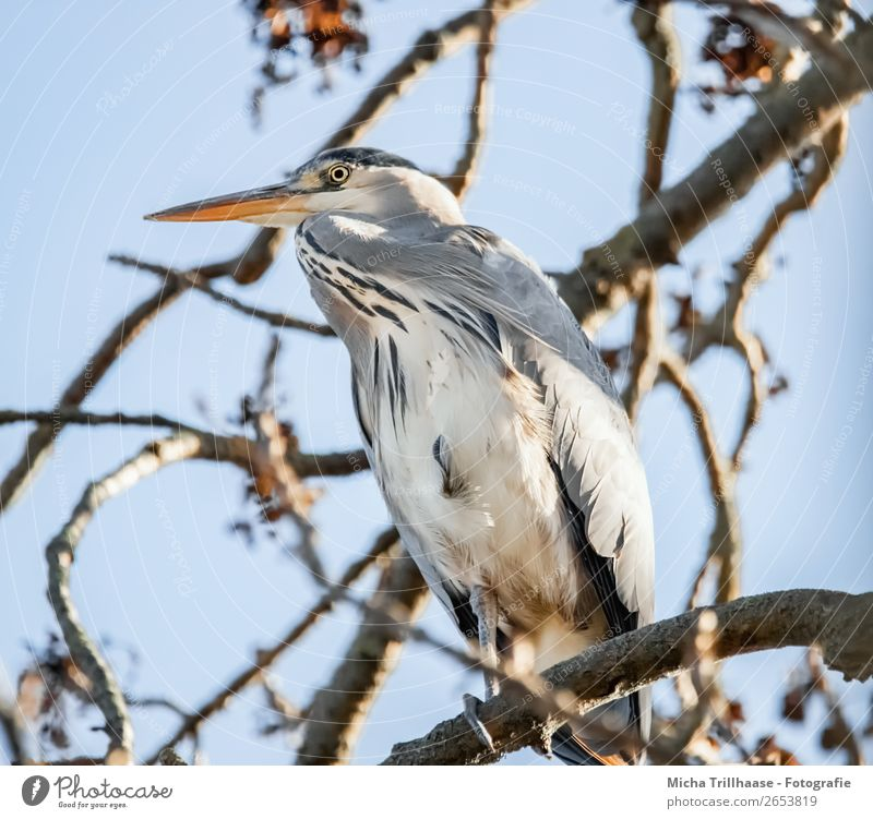Heron in the tree Nature Animal Sky Sunlight Beautiful weather Tree Wild animal Bird Animal face Wing Claw Grey heron Beak Feather 1 Observe Relaxation Looking