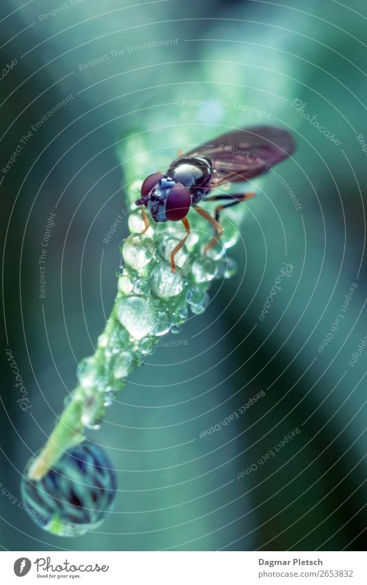 Fly and water drops Nature Animal Drops of water Spring Summer Autumn Weather Plant Grass Leaf Foliage plant Garden Meadow Forest Animal face 1