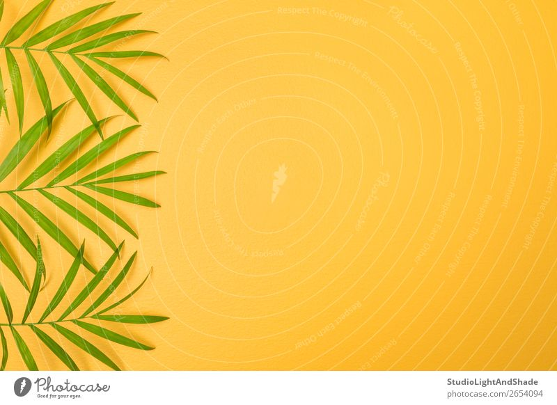 Green palm leaves on bright yellow background Design Exotic Joy Happy Beautiful Summer Interior design Decoration Gardening Nature Plant Tree Leaf Simple Fresh