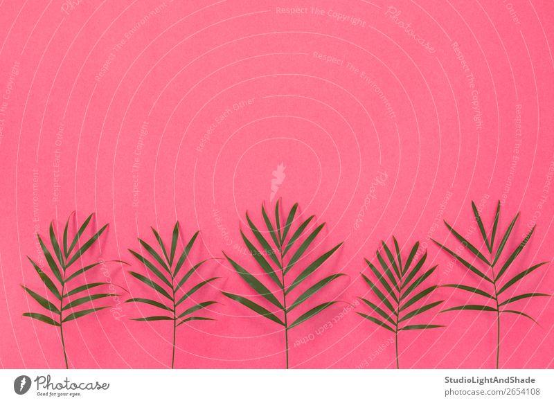 Green palm leaves on bright pink background Design Exotic Beautiful Summer Interior design Decoration Gardening Feminine Nature Plant Tree Leaf Fashion Simple