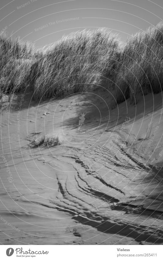 Cracks in the island Landscape Earth Sand Grass Beach North Sea Island Discover Dune Spiekeroog Marram grass Black & white photo Exterior shot