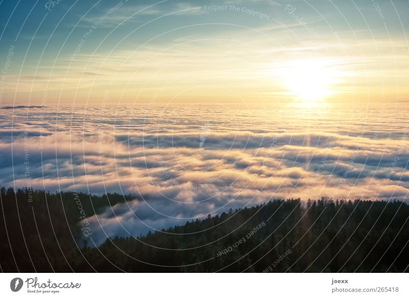 Sky Blue Beautiful Sun Clouds Calm Forest Black Mountain Yellow Above Bright Horizon Tall Beautiful weather Hope