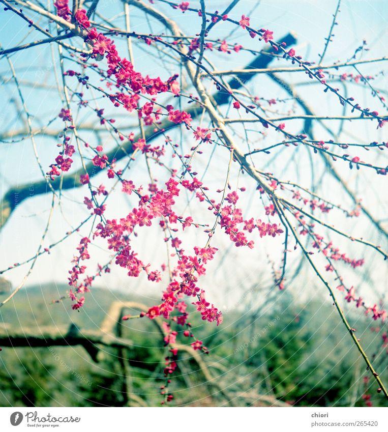 A red star Blue Green Flower Love Garden Music Art Rock Free Good Meeting Work of art