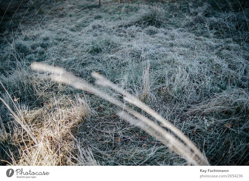 frozen grass on a frosty meadow autumn beautiful botany brown chilly cold color december environment fall flora foliage ground hoarfrost ice icy lawn leaf