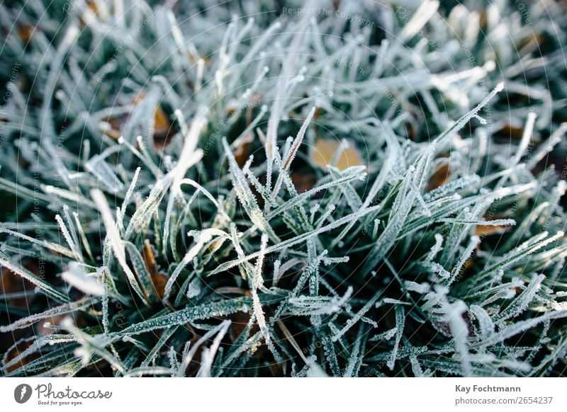 frozen grass close-up autumn beautiful botany brown chilly closeup cold color december environment fall flora foliage frost frosty ground hoarfrost ice icy lawn