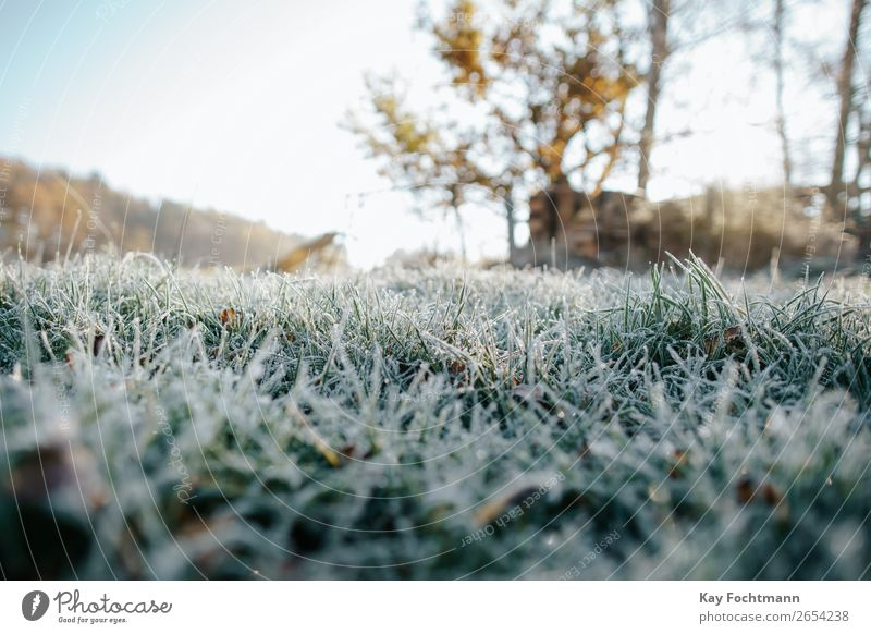 low-angle shot of frozen grass autumn beautiful botany chilly close-up closeup cold color december environment fall flora frost frosty ground hoarfrost ice icy
