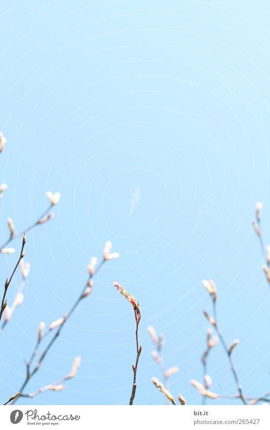 Sky Nature Plant Blue Tree Calm Blossom Spring Garden Horizon Air Growth Fresh Birthday Bushes Perspective