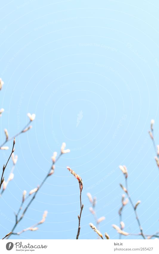sprout upwards... Calm Meditation Valentine's Day Mother's Day Wedding Birthday Baptism Nature Air Sky Cloudless sky Horizon Spring Plant Tree Bushes Blossom
