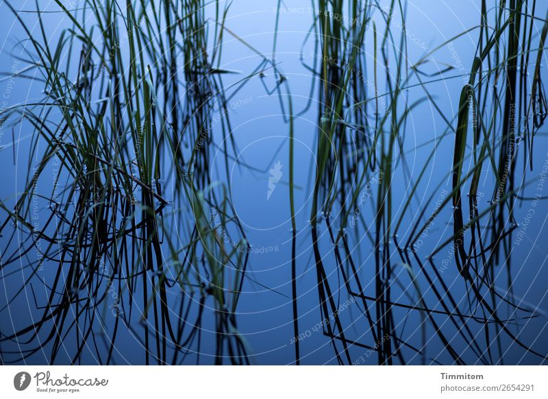 Blue lake with stalks (2) Environment Nature Plant Juncus Lake Growth Esthetic Simple Natural Green Black Emotions Calm Relaxation Colour photo Exterior shot