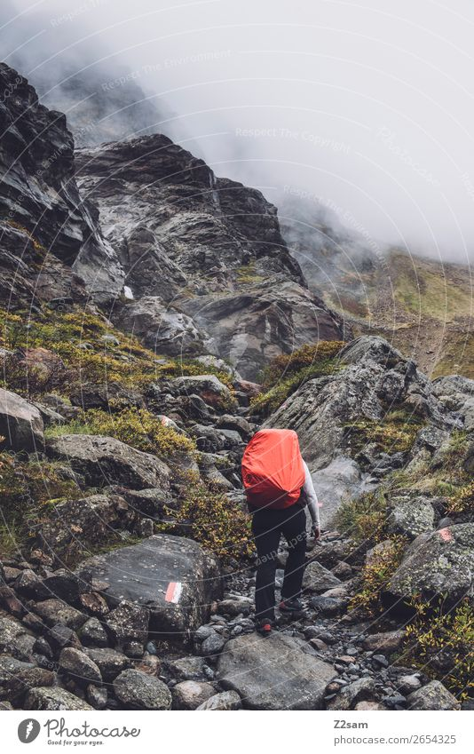 Ascent to the Braunschweiger Hütte | E5 Vacation & Travel Adventure Hiking Human being Nature Landscape Autumn Bad weather Fog Alps Mountain Glacier Brook