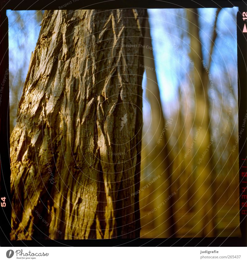 forest Environment Nature Plant Beautiful weather Tree Forest Natural Warmth Brown Tree bark Tree trunk Rough Dry Skin Colour photo Exterior shot Deserted Blur