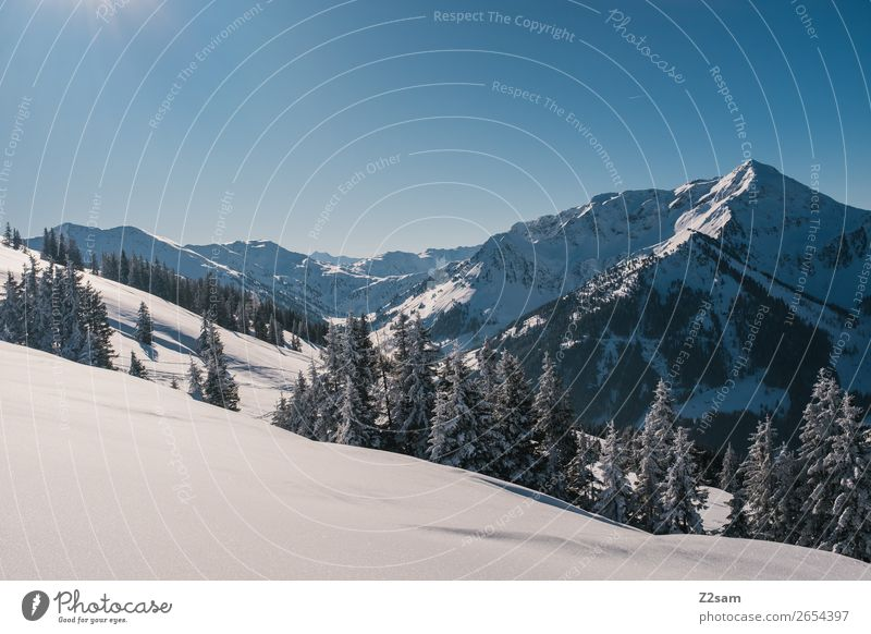 Winter wonderland Environment Nature Landscape Beautiful weather Ice Frost Snow Forest Alps Mountain Natural Blue Calm Loneliness Idyll Sustainability