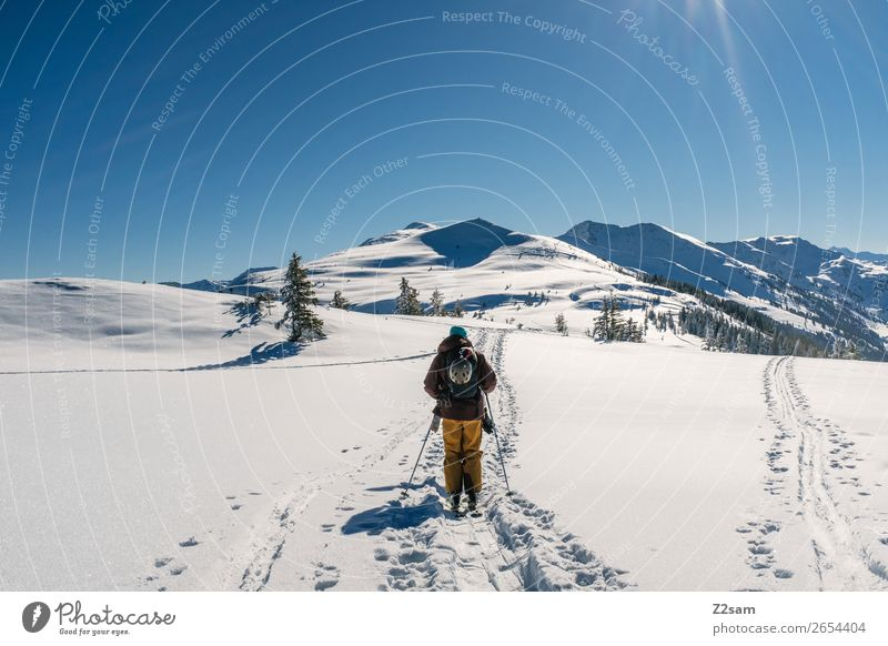 Tourers. Freeriders. Trip Mountain Hiking Winter sports Skiing Nature Landscape Cloudless sky Beautiful weather Snow Alps Going Tall Cold Blue Adventure