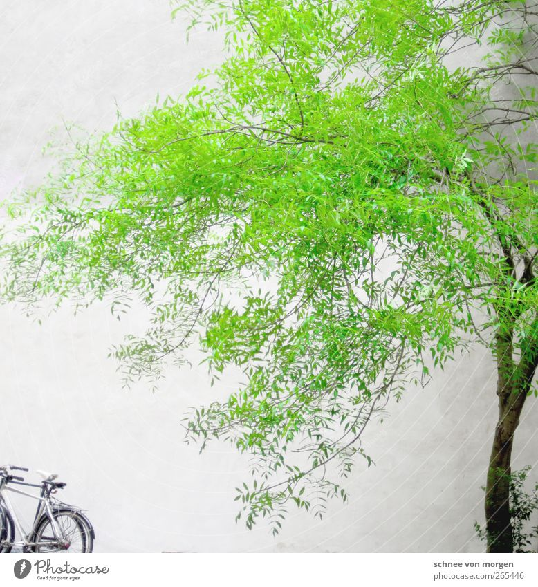 "it's so green. Environment Nature Spring Plant Tree Foliage plant House (Residential Structure) Green White ""tree trunk Bicycle Wall (building) Concrete"