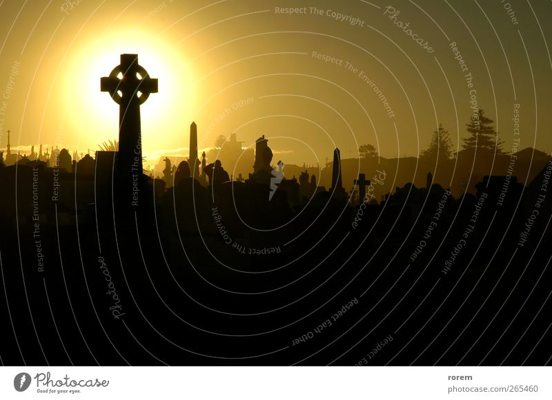 cemetery sunset Black Death Dark Life Sadness Brown Grief Monument Cemetery Hallowe'en Grave Funeral Crow Tomb Sydney Funeral service