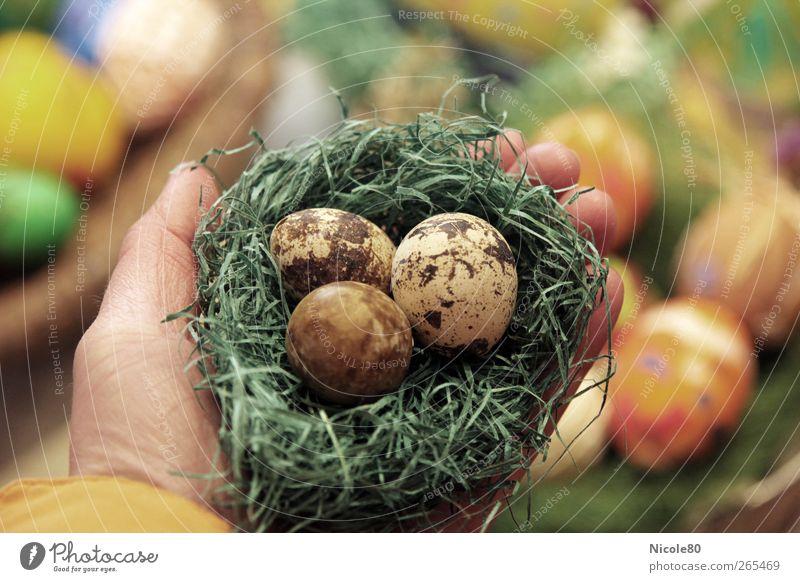 triple Eggs Nature Beginning Easter Easter egg nest Eggshell Nest 3 Quail's egg Fragile Protection Hand To hold on Colour photo Interior shot Deserted Day