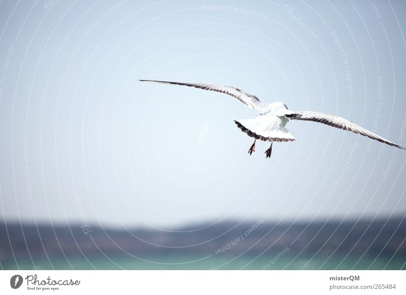 Ocean Animal Far-off places Coast Horizon Bird Wind Flying Adventure Wing Idyll Seagull Hover Floating Gull birds Sea bird