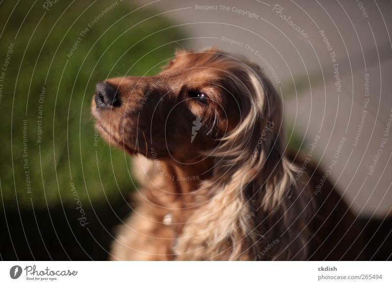 Dog looking towards the sun Green Animal Brown Pet