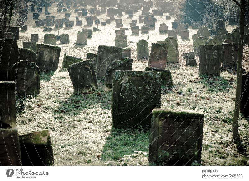 silent Cemetery Tourist Attraction Stone Tombstone Old Brown Green Emotions To console Sadness Pain Calm Death Grief Remember Eternity Muddled Subdued colour